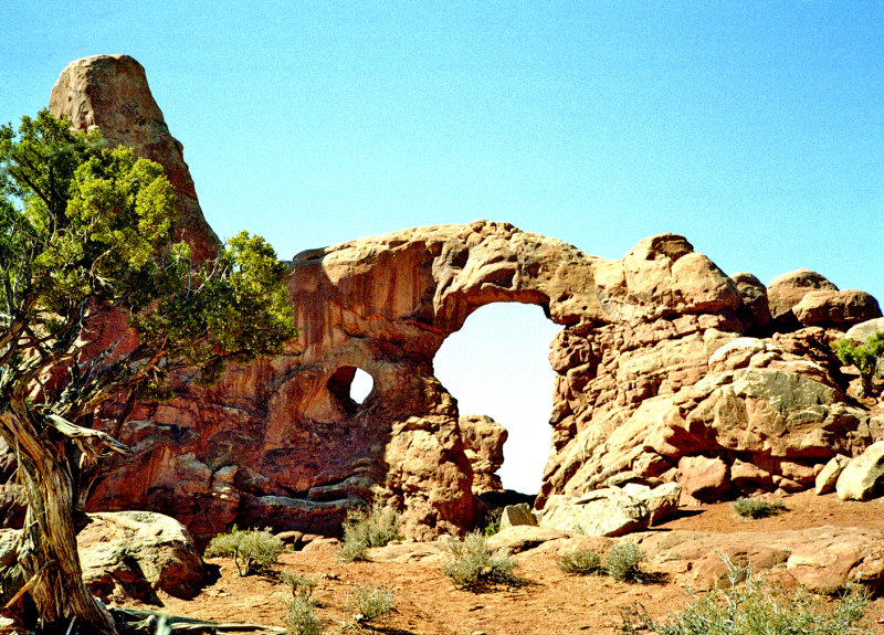 Doughnut Arch plus