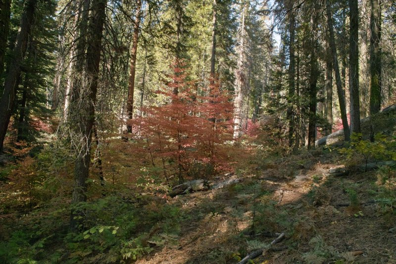 fall color Yosemite.jpg
