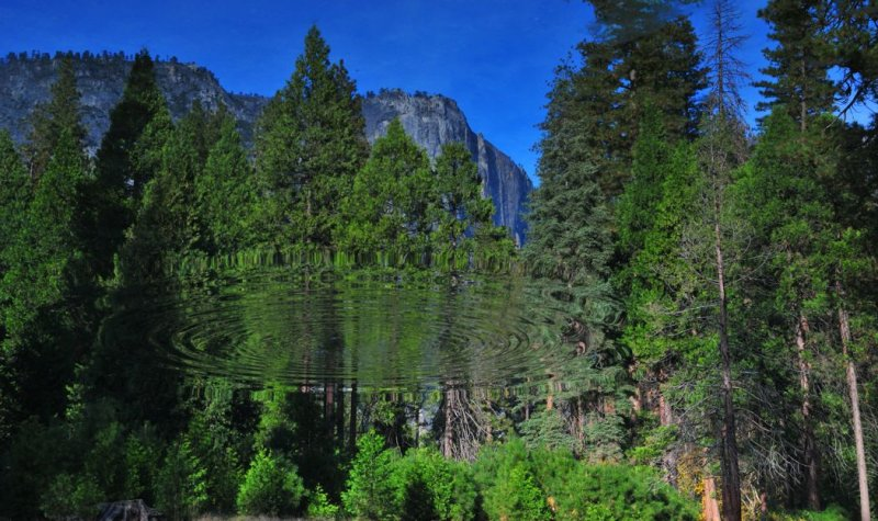 Flipped Reflection in the Merced River