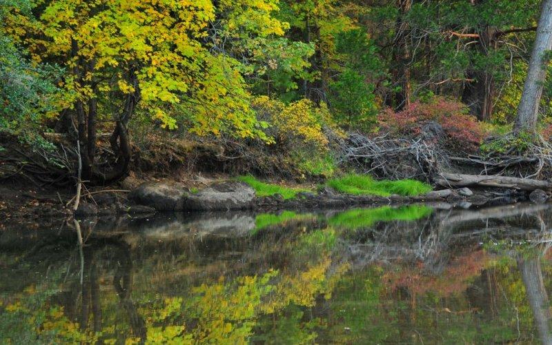 Merced River near El Capitan Meadow