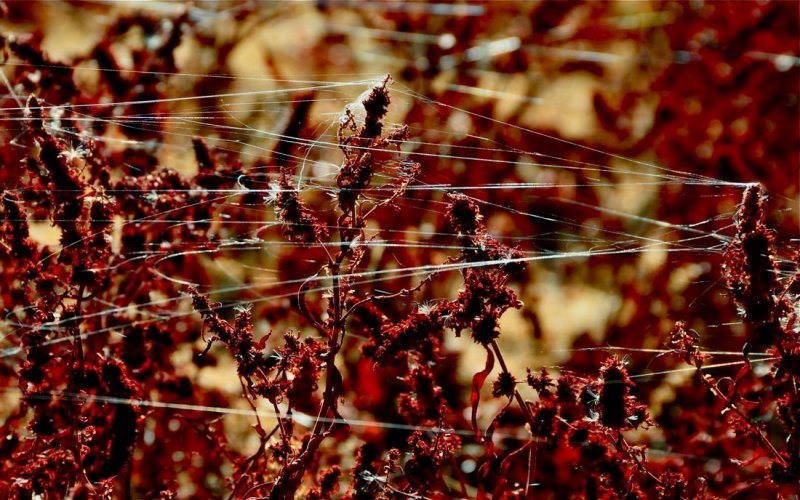 Plants and Spider Webs