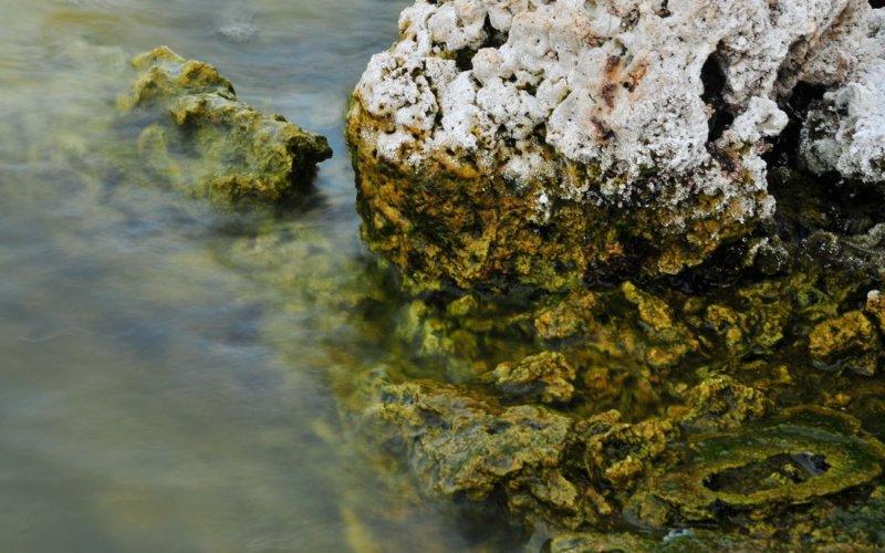 Detail, Mono Lake