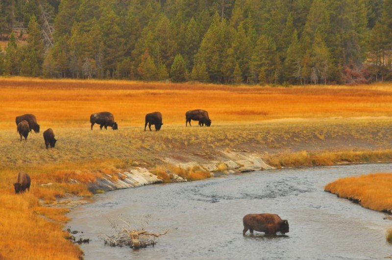 Crossing the Firehole River