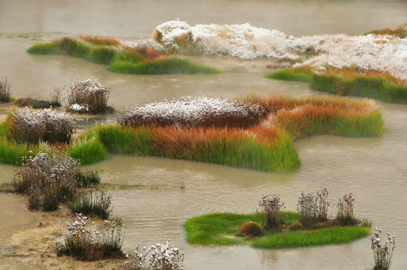 Snow-Topped Vegetation, Near the Volcanic Mud Pots, Yellowstone