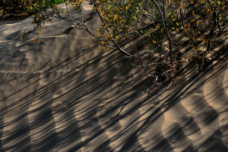 Sand Dunes and Creosote