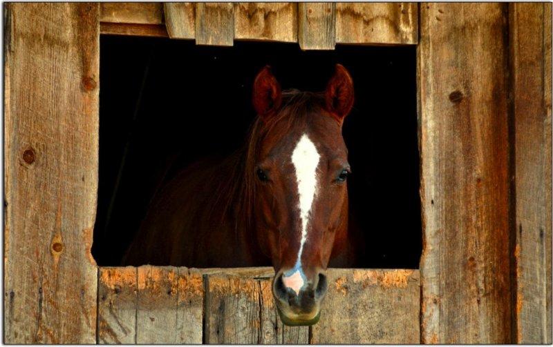Curios Horse