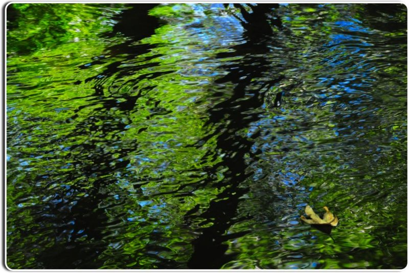 Reflections in the Carmel River
