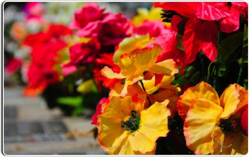 Flowers in the Garden of Memories Cemetery, Salinas