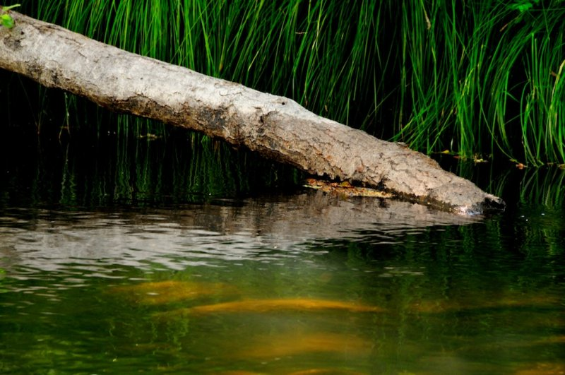 Carmel River Reflections