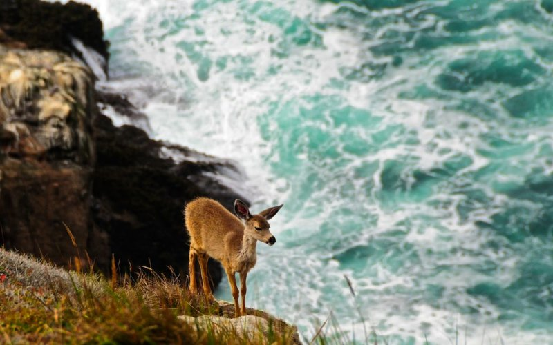 Fawn Perched on the Cliff