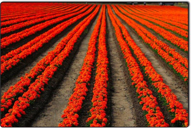 Flowers near San Luis Obispos