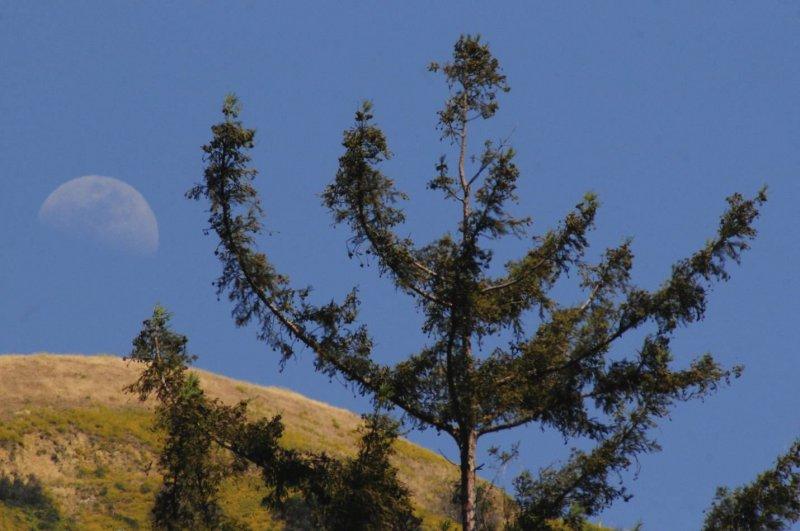 Moonrise Over Pfeiffer Big Sur State Park