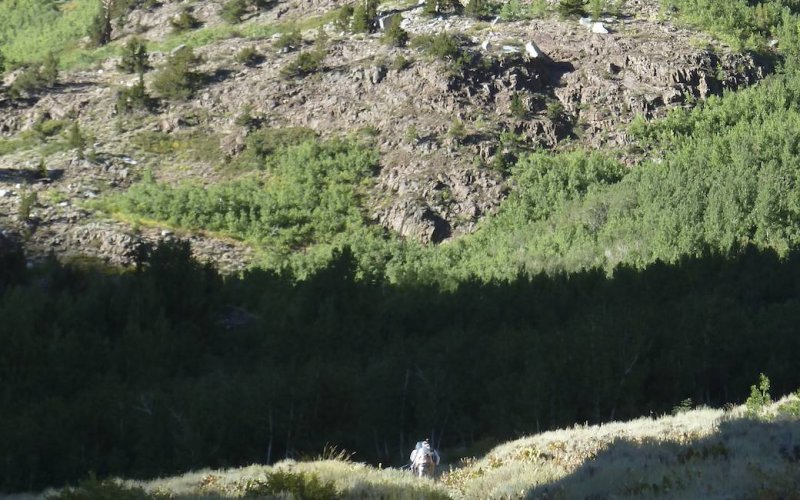 We enter a forest, taking us out of the dry terrain at the bottom of the canyon.