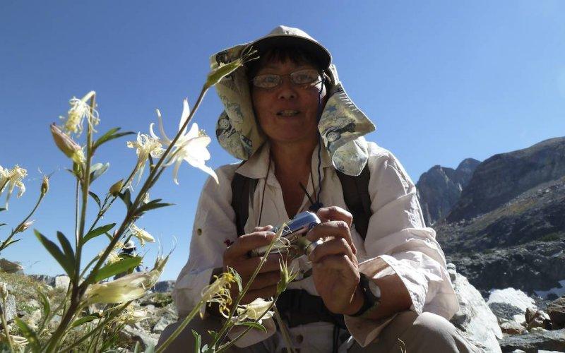 Debbie photographs alpine columbine.