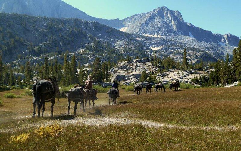 The receding mule pack.
