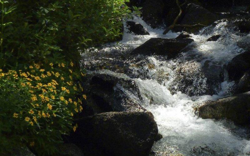 Flowers along McGee Creek.