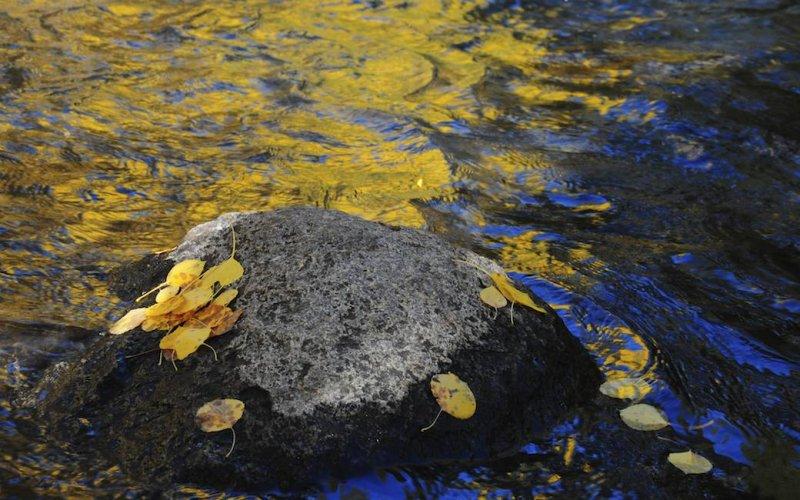 Rock, Leaves, Creek