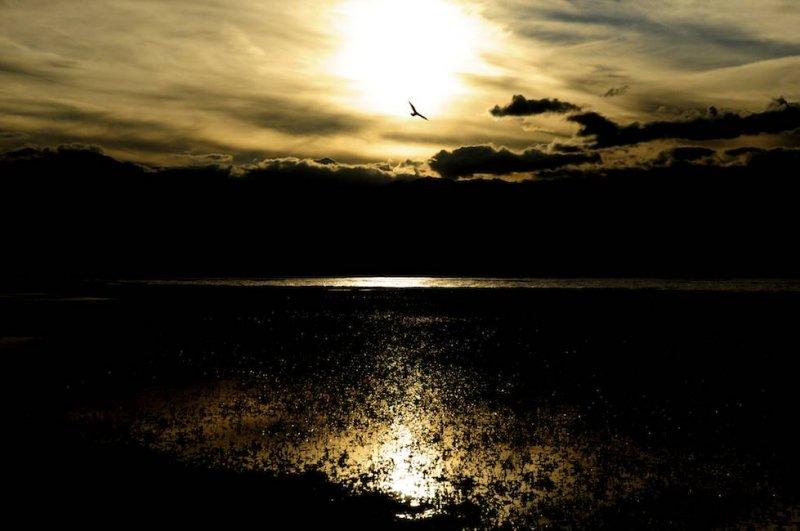 Seagull at the Bridgeport Reservoir