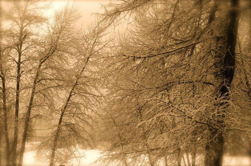 Winter Scene, Yosemite Valley
