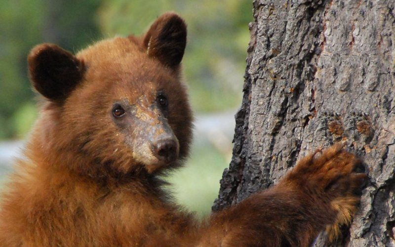 A Bear Ready For Its Close-Up