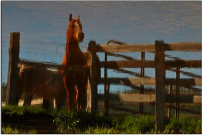 Flipped! Horses In Reflection near Greenville, California