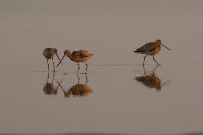 Shore Birds #2