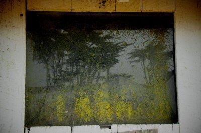 Reflection in a Barn Window