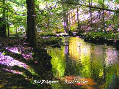 Sawmill Brook.jpg