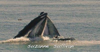 pair humpbacks