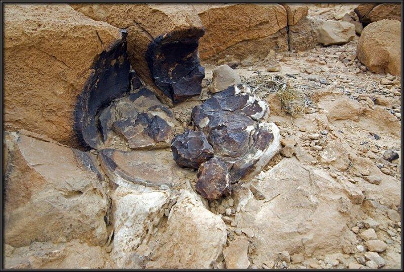 Typical rocks of Mt. Karkom