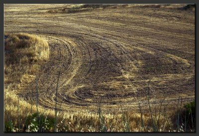 Golden fields forever