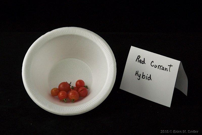 Red Currant Hybrid.jpg