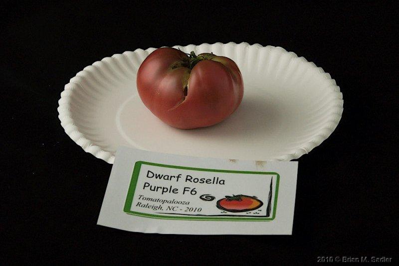 Rosella Purple F6.jpg