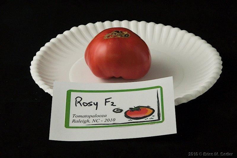 Rosy F2-3.jpg