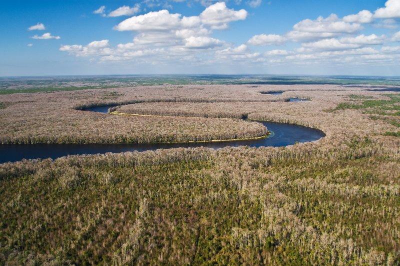 Suwannee River Near the Gulf