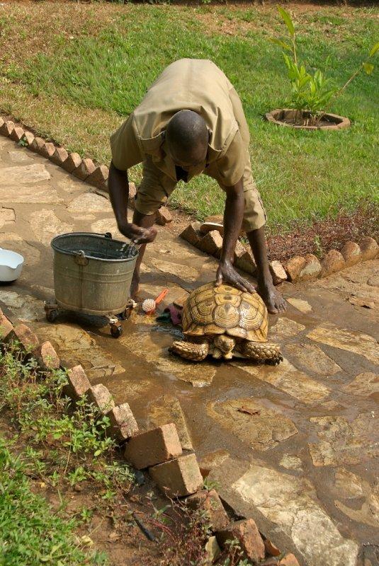 Tortoise Wash