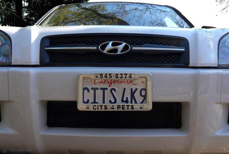 CITS 4K9