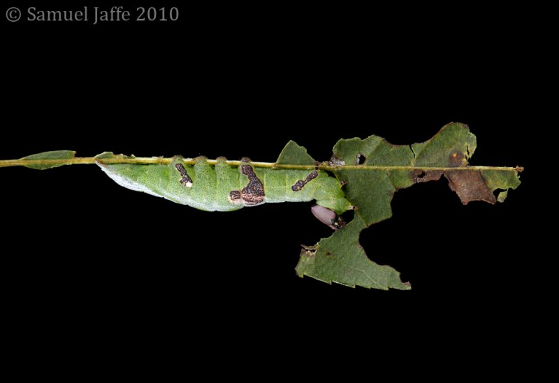 Life on the Leaf Edge - Wavy 21x31
