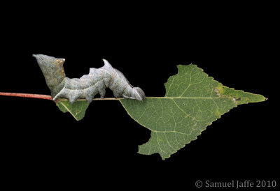 Life on the Leaf Edge - Finned 21x31
