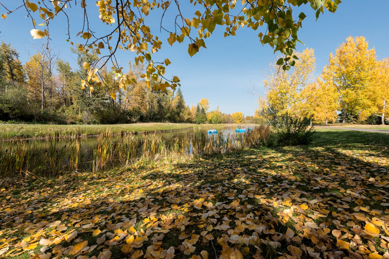 Fall At Bower Ponds