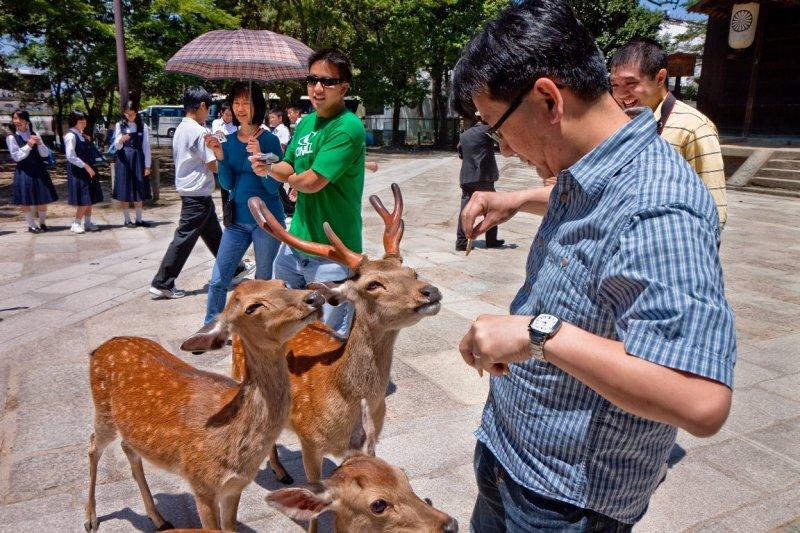 Deer of Nara Park