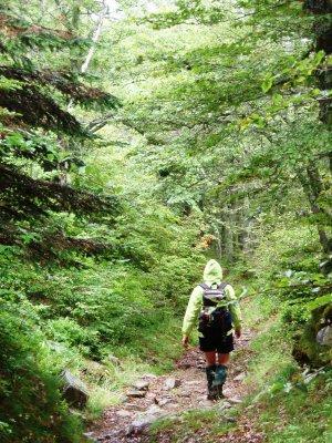 Rainy forest hike