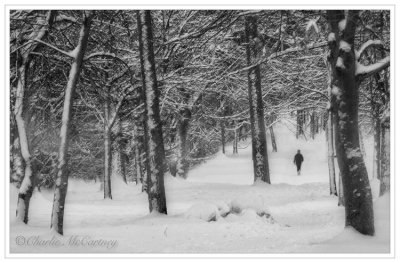 Winter Walk - DSC_5912a.jpg
