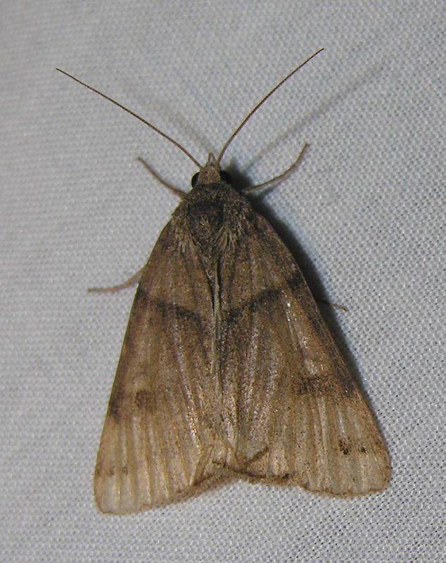 moth-04-06-2008-3.jpg