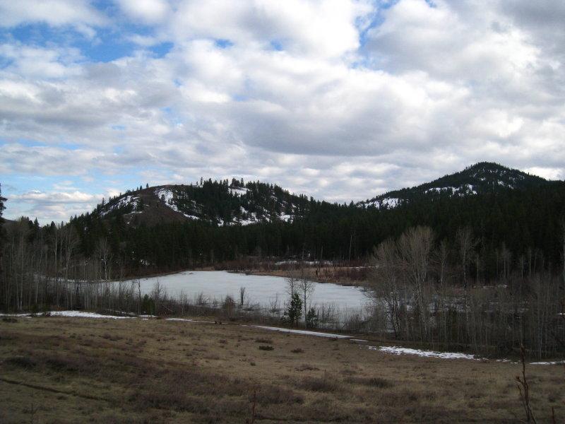 frozen beaver pond