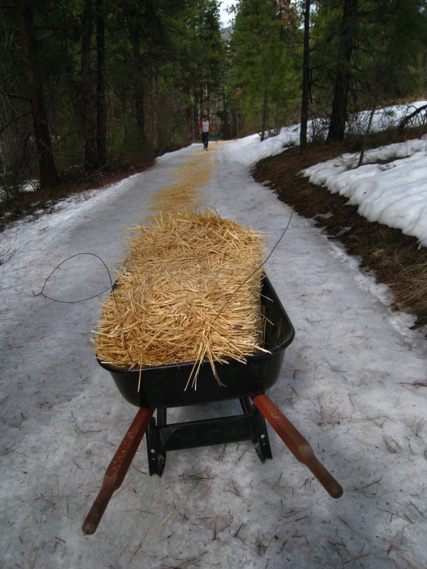 hay covered trail