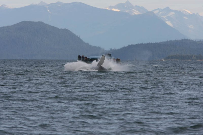 Whale watching with Orca Enterprises in Juneau, AK