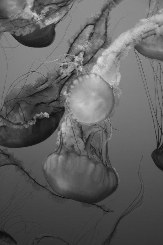 Monterey Aquarium_jellyfish.jpg