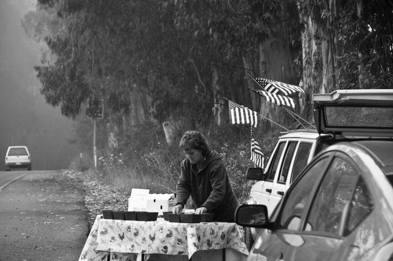 <B>Roadside Vendor</B> <BR><FONT SIZE=2>Bodega, California - August 2010</FONT>