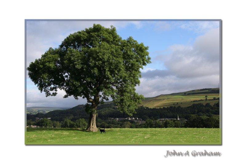 Holly and tree